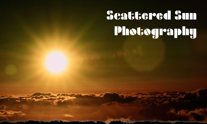 Scattered Sun Photography
